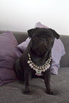 #MyLittlePrincess, #Miss Pug, #Moon, #Beauty, #Pug, #Carlino, #Mops, #necklace