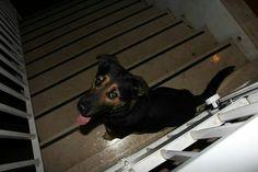 Rufus <3
