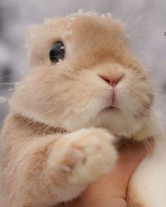 30 cute bunny pictures you have to see today Cute Baby Bunnies, Funny Bunnies, Bunny Meme, Cute Little Animals, Cute Funny Animals, Fluffy Animals, Animals And Pets, Cute Bunny Pictures, Bunny Pics