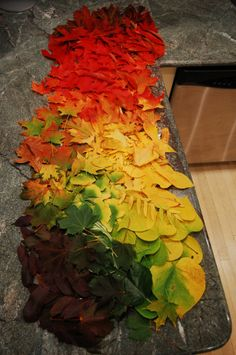 Andy Goldsworthy  color transition
