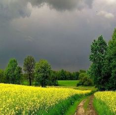 on a cloudy day in the country Landscape Photos, Landscape Paintings, Landscape Photography, Nature Photography, Beautiful World, Beautiful Places, Country Life, Country Roads, Nature Pictures