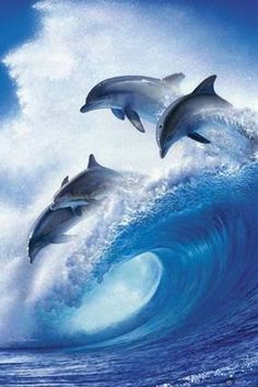Dolphin, wave