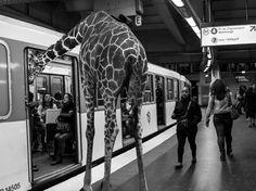 EN IMAGES. Un safari photo... dans le métro - L'Obs