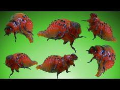 Növényi burgonya. Rovarok, hogyan lehet eltávolítani őket. Negyedik rész. - YouTube Plantation, Fish, Youtube, Gardens, Apples, Tips, Lawn And Garden, Pisces, Youtubers