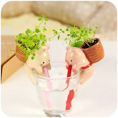 self watering mini planters