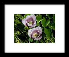 Photography Framed Print featuring the photograph Betty's Front Yard by Janis Kirstein