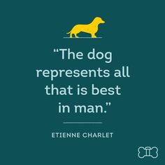#DogVacayQuote of the week says it all.