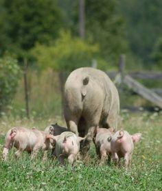 Piggy ❤︎