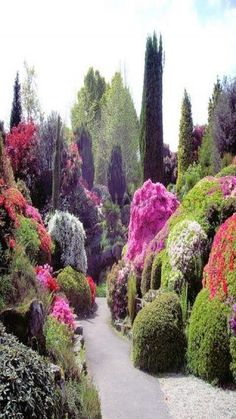 Stunning flowering tree garden
