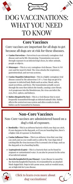 Dog Vaccinations: Everything You Need To Know   Dog Health Tips   Dog Vaccines  