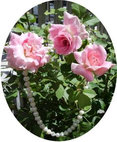 roses in the sun, pearls in the shade - send as free e-card