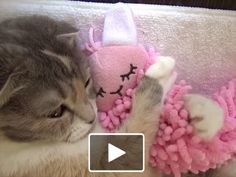 Cat Video: Cat Hugs Rabbit Doll - Sleepy kitty loves to snuggle with a pink bunny doll!