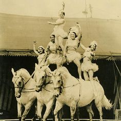 Circus Horses, Come And See, Wonderful Horses www.horse Circus Show Horses Old Circus, Circus Art, Night Circus, Vintage Circus, Vintage Horse, Circus Theme, Vintage Pictures, Old Pictures, Vintage Images
