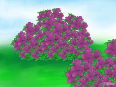 Prune Azaleas