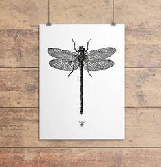 'vintage dragonfly illustration' print by oakdene designs   notonthehighstreet.com