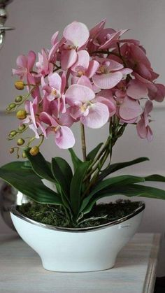 Indoor Orchids, Artificial Orchids, Orchids Garden, Orchid Plants, Orchid Flowers, Dendrobium Orchids, Purple Orchids, Orchid Flower Arrangements, Orquideas Cymbidium