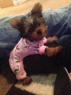 59 Best Cute Puppies In Pajamas Images Cute Baby Dogs Cute