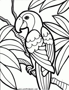 parrot coloring pages bird coloring pagesfree printable - Free Printable Color Sheets