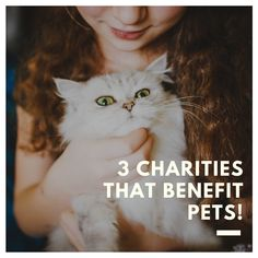 3 Charities That Benefit Pets - Fairfield Residential Pet Care, Fur Babies, Cute Dogs, Funny Cats, Charity, Pup, Creatures, Kitty, Blog