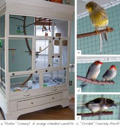 Seriously...I have always wanted my own aviary.  Looks like I could create my own very cool one with an old hutch and lots of hardware cloth.  Maybe I should add this to my bucket list