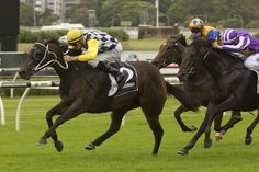 Thump (AUS) 2010 Dkb.m. (Red Ransom (USA)-Oomph (AUS) by Flying Spur (AUS) 1st ATC Triscay S (AUS-G3,1200mT,Randwick) (photo: Racing and Sports)