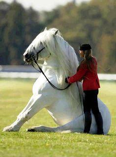 White horse Dressage
