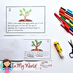 Apple Life Cycle. Includes a book that can be read out loud to students and differentiated worksheets for children to complete.