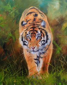 Tiger Superb David Stribbling Original Oil Painting | eBay
