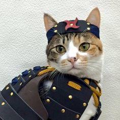 des armures de samouraï pour chats et chiens  2Tout2Rien
