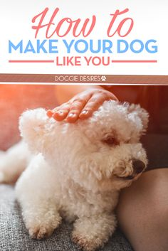 How to make your dog like you >> http://doggiedesires.com/how-to-make-your-dog-like-you/