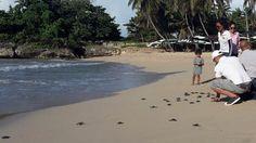 Medio Ambiente libera alrededor de 150 tortugas