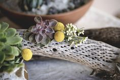 succulent adorned ch