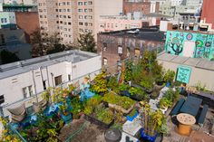 What is Urban Gardening? The Hot Trend That's Taking Over Cities - we CAN grow our own food in very small spaces!