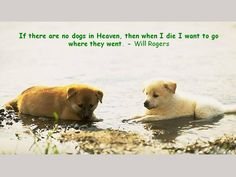 For pet lovers... #petlovers