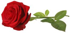 Red Rose with Stem Transparent PNG Clip Art Image