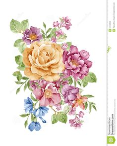 watercolor-illustration-flower-set-simple-white-background-51532542.jpg (1043×1300)