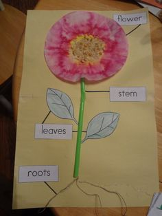 Love this diagram with a coffee filter and sunflower seeds!