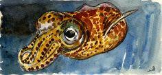 "Squid octopus calamari marine ocean sea fish fishing animal 8x4"" 21x9.5 cm art original Watercolor painting by Juan bosco"