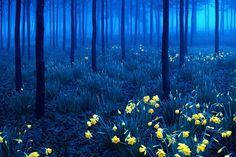 黒い森(Black Forest)/ドイツ