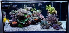 Nice salt water reef layout with sand voids                              …