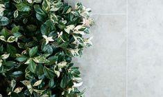 Andorra® Limestone Pavers, Tiles & Stone Flooring by Eco Outdoor Landscape Design, Garden Design, Limestone Pavers, Trachelospermum Jasminoides, Lomandra, Steel Edging, Paving Ideas, Rose Bay, Crassula Ovata