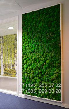 Зеленые фито-стены из кочкового мха - Этуаль Флора Стабилизированные растения