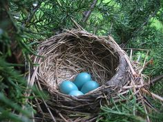 Robin's Egg Nest - Could spark some ideas later on down the road