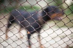 The FBI will begin tracking cases of animal cruelty nationally in 2016, a move advocates hope will bring more attention to the crime among law enforcement agencies and underscore the link between animal abuse and other violent crimes.