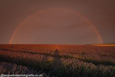 https://flic.kr/p/xfEtyG | Somewhere under the rainbow | The wonderful lavender fields of Hitchin. When I arrived the sky was horrible blank grey . An hour later and nature was really putting on a show. This was the finale ! And WHAT a finale .......