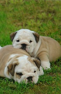 I have a cat. And I've always wanted a British bulldog!! Hopefully I can get one in the near future <3