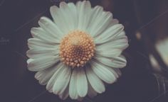 daisy detail by ApertureVintage on Creative Market