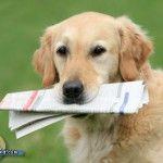 Golden Retriever Charlie erreicht Weltrekord im Bellen
