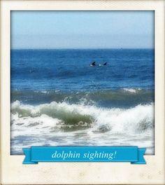 #beach. #dolphin. [081711]
