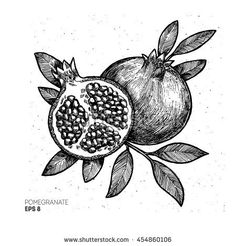 Find Pomegranate Illustration Vintage Engraved Style Illustration stock images in HD and millions of other royalty-free stock photos, illustrations and vectors in the Shutterstock collection. Pomegranate Drawing, Pomegranate Tattoo, Botanical Illustration, Illustration Art, Ink Illustrations, Arte Sketchbook, Gravure, Botanical Prints, Vintage Art